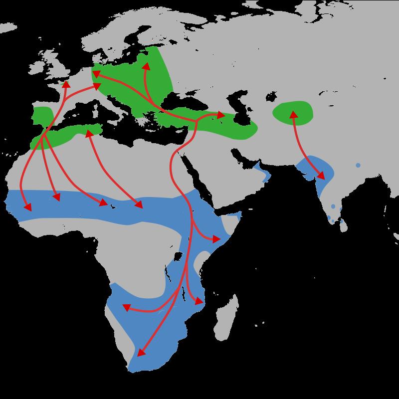 Arealul și rutele de migrare ale berzelor. Zona verde reprezintă locurile de cuibărit, iar cea albastră aria de iernat