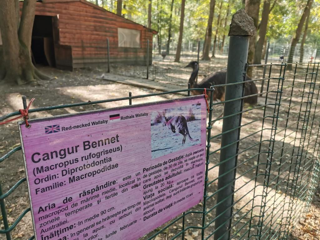 Carnagiu la Zoo Timișoara