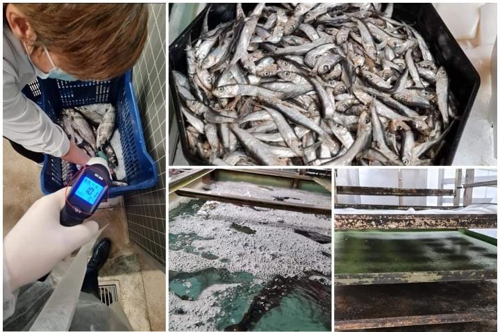 """Pește viu depozitat și comercializat în spații """"total neconforme"""""""